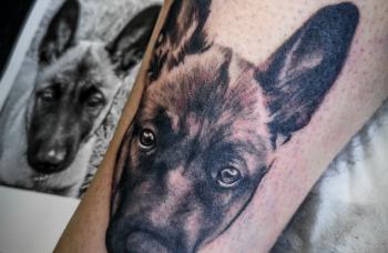 Pes - portrét