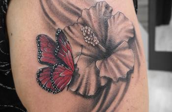 Ibišek a motýli