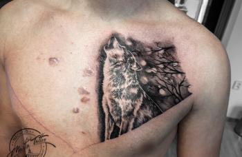 Vlk - detail